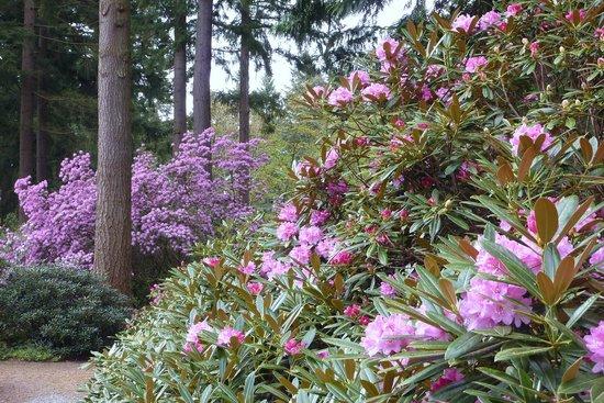 Merveilleux Rhododendron Species Botanical Garden