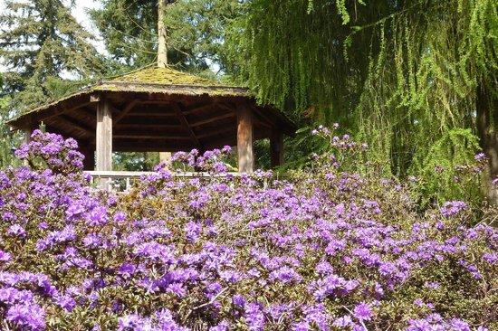 Exceptionnel Rhododendron Species Botanical Garden