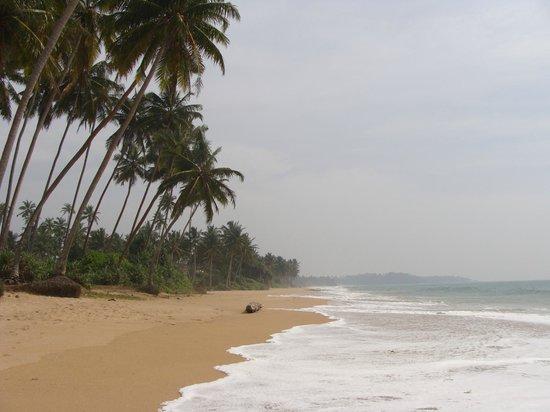 Kuoni Ceylon Tour: пляж Козгоды