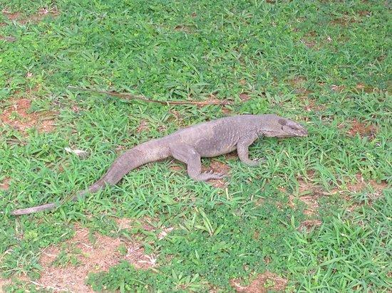 Kuoni Ceylon Tour: Уннаватуна