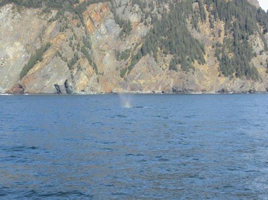 Kenai Fjords Tours: whale