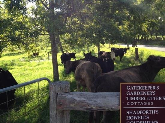 Cedar Creek Cottages & Wine : Some friends to say hello to on the way to the cottages