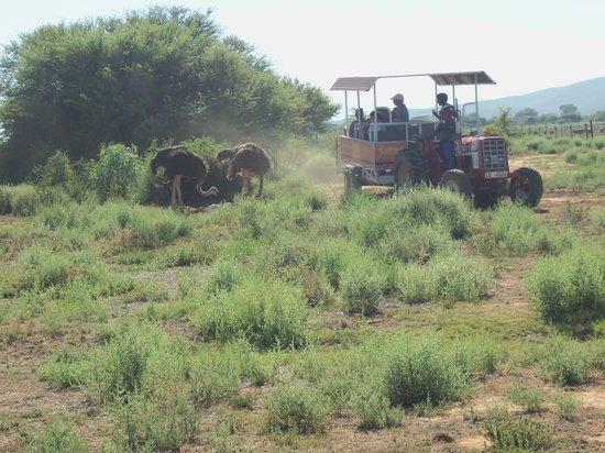Safari Ostrich Show Farm: enjoying the tractor ride on the Safari Guided tour #Safari Ostrich Farm