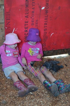 Tiger Lily Farm : A visit with the chicks is always a hit