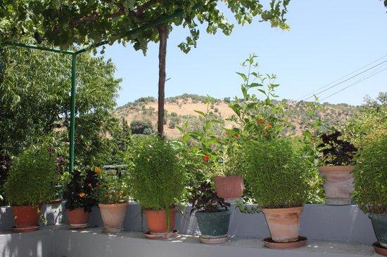 Las Millanas: view