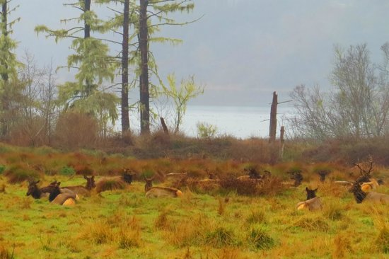 Prairie Creek Redwoods State Park: Elks Still Resting !