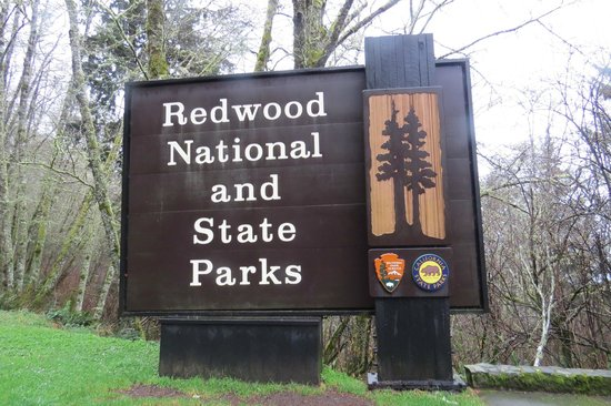 Prairie Creek Redwoods State Park: Start of a Great Drive