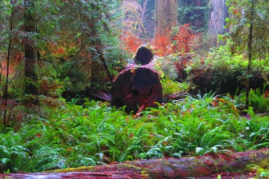 Prairie Creek Redwoods State Park: Lovely Colours