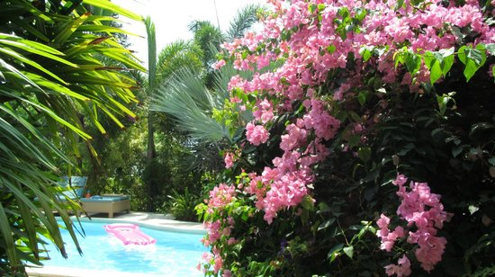 Shiva Samui – The New Name for Samui Beach Village: Villa surrounded by lush tropical plants