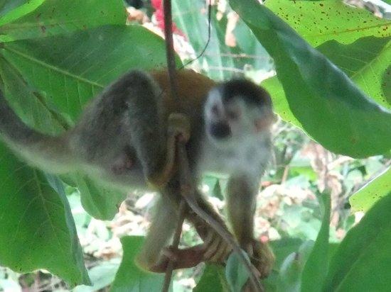 Karahe Beach Hotel : Monos de visita