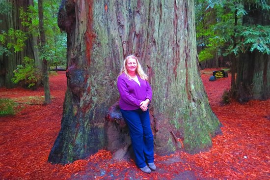 Avenue of the Giants : A Pygmy & A Giant \?