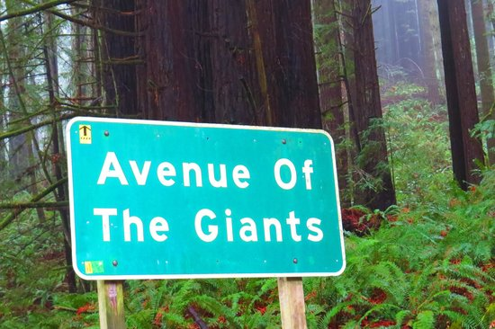 Welcome to Avenue of the Giants