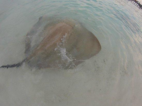 Reethi Beach Resort: faune