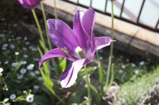 Cuq en Terrasses : Fleur