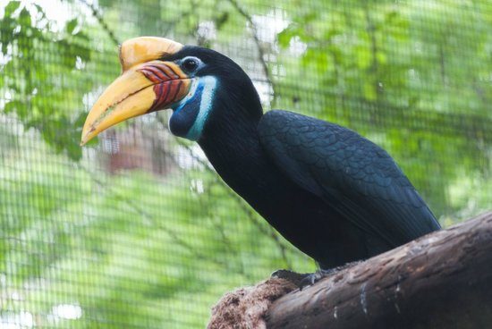 St. Augustine Alligator Farm Zoological Park : These birds were very entertaining
