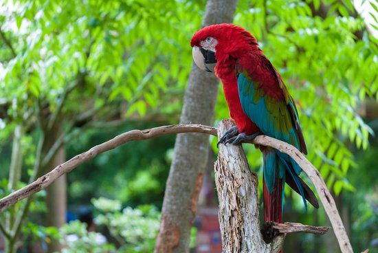 St. Augustine Alligator Farm Zoological Park : Parrots are openly displayed, yet just out of reach of curious hands