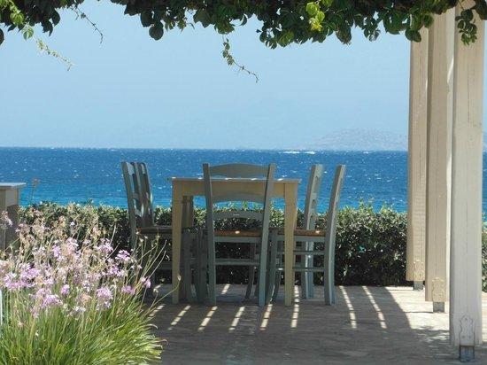 Ostria Inn: Terrace