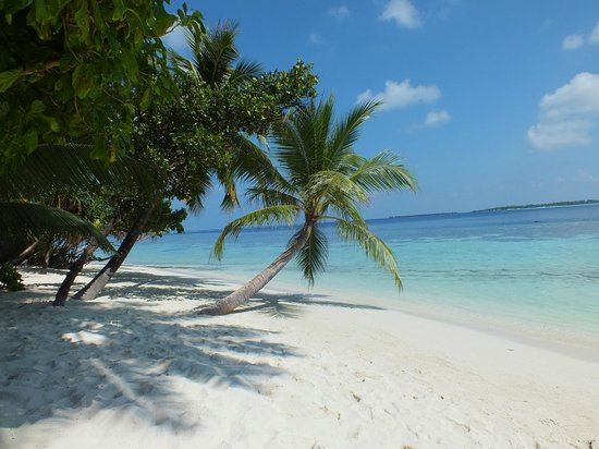 Vilamendhoo Island Resort & Spa : bord de mer