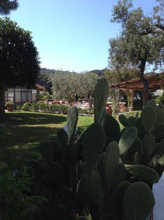 Garden & Villas Resort: Vista giardino
