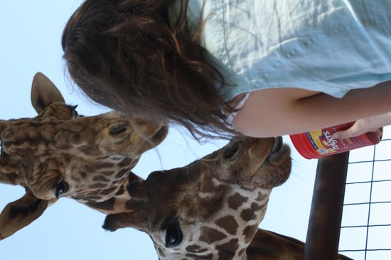 The Lazy 5 Ranch: Giraffe's Lunch