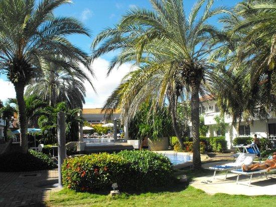 LD Palm Beach: Palm Beach Margarita