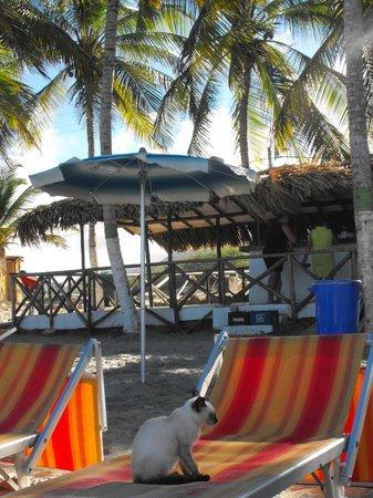 LD Palm Beach: Palm Beach Margarit - Beach Bar