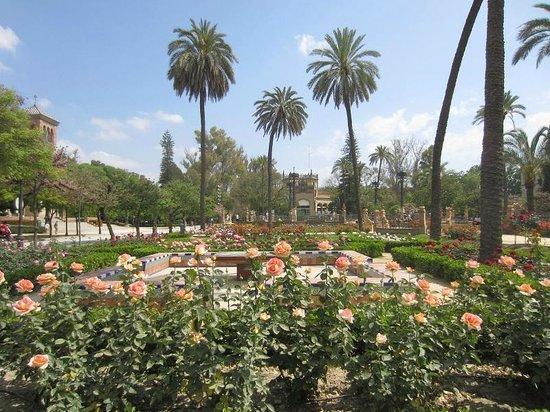 Parc de María Luisa : roseraie