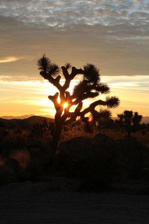 Joshua Tree National Park: Lever de soleil