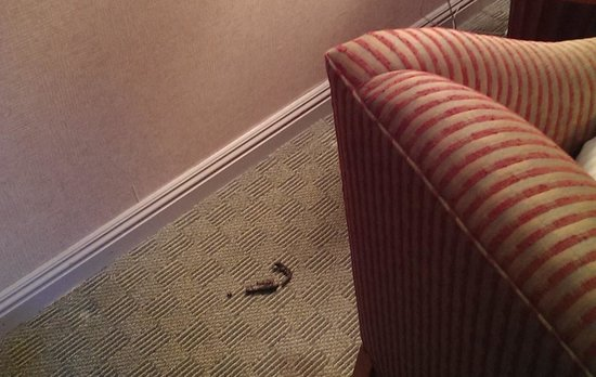Omni Chicago Hotel : Feces in the room!