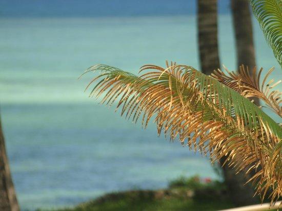 Melia Zanzibar: Palme