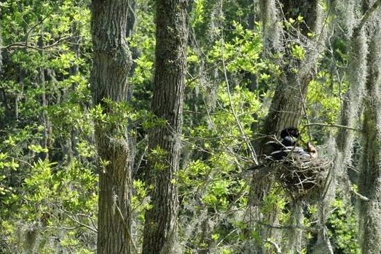 Magnolia Plantation & Gardens: swamp garden