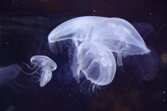 Oceanogràfic: le meduse