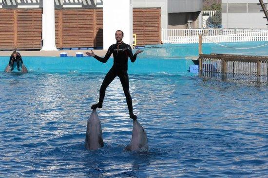 Oceanogràfic: Lo spettacolo dei delfini