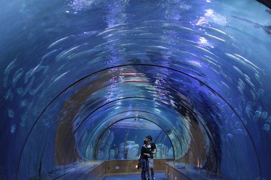 Oceanogràfic: Il tunnel submarino