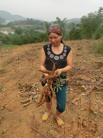 Bloom Microventures : Cassava plants