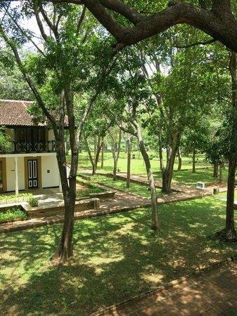 Cinnamon Lodge Habarana: Vista del parco