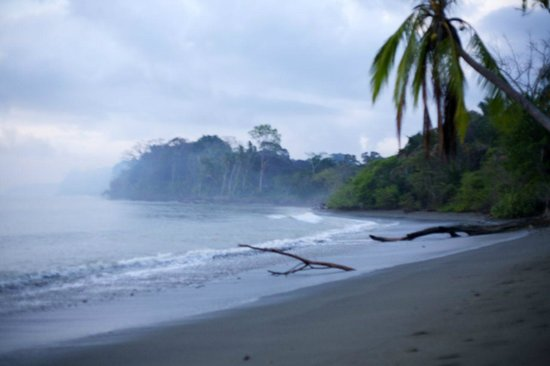 Blue Osa Yoga Retreat and Spa : The beach at Blue Osa in the early tranquil morning
