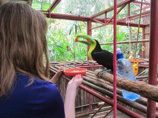 Foundation Jaguar Rescue Center : Feeding a Toucan