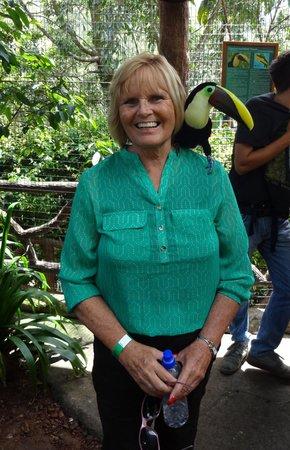 La Paz Waterfall Gardens: Toucan time!
