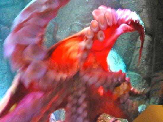 Monterey Bay Aquarium: It's underbelley