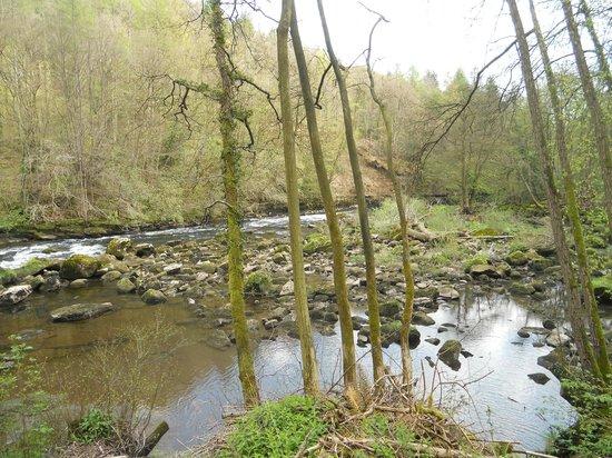 Hackfall Woods: Lovely river walk