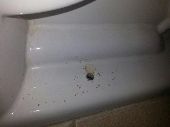 Red Roof Inn Hardeeville: Dirt And Bugs Around Bottom Of Toilet