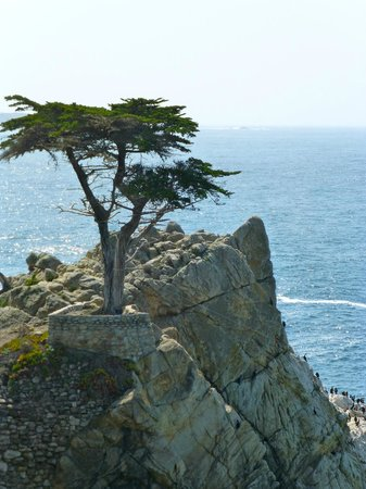 17-Mile Drive: Lone Cypress