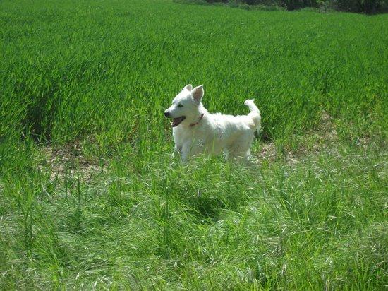 Agriturismo Sant'Erasmo: nei campi