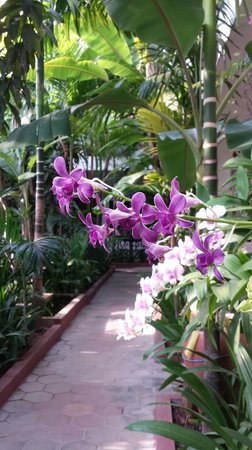 La Niche d'Angkor Boutique Hotel : Orchids all around!