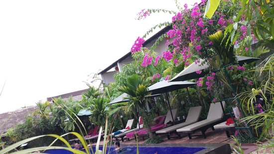 La Niche d'Angkor Boutique Hotel : Pool & beautiful foliage all around