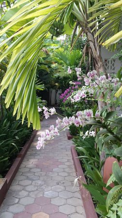La Niche d'Angkor Boutique Hotel : Beautiful orchids...