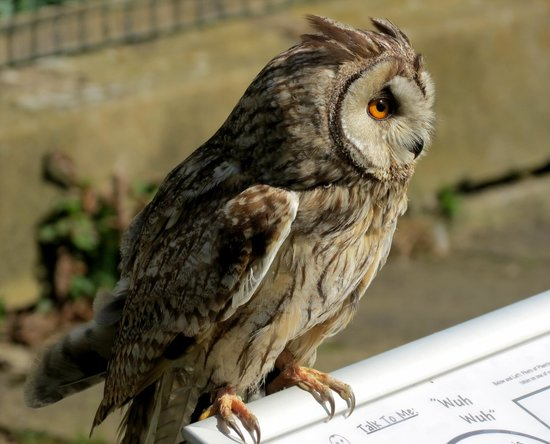 Swinton Park Country Club and Spa: Owl Experiance