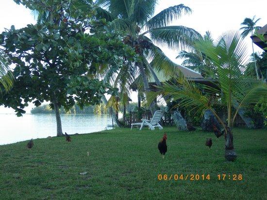 Hotel Fare Vaimoana : Espace de verdure entre le bungalow et la plage