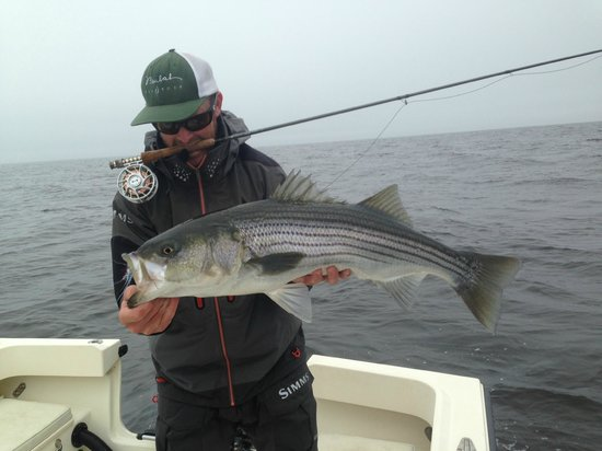 Greasy Beaks Fly Fishing and Boston Fly Fishing